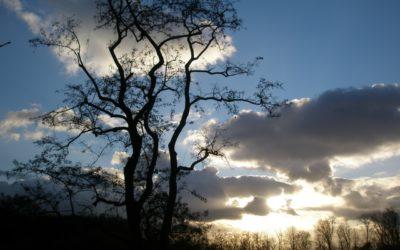 L'arbre de vie symbole du lien